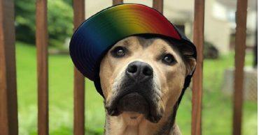 Пес в кепке