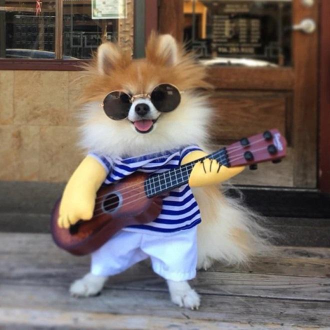 Собака гитарист