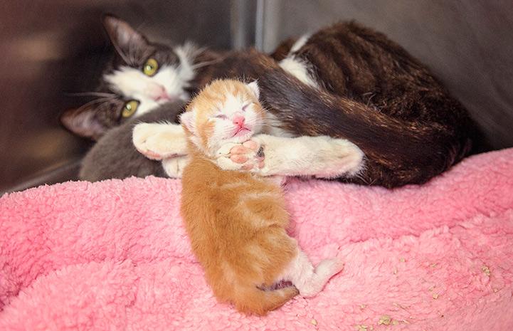 кошка с рыжим котенком