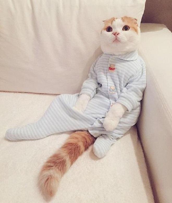 Котик сидит на диване