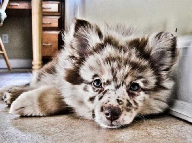 Милый щенок