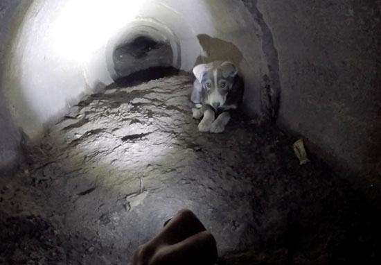щенок в тоннеле