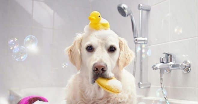 Собака с резиновой уткой