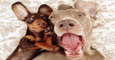 Собака открыла рот