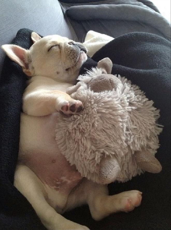 Собака спит с овечкой