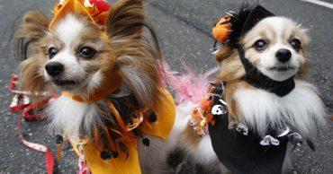 «Сладость или гадость?»: 12 питомцев, которые готовы праздновать Хэллоуин!