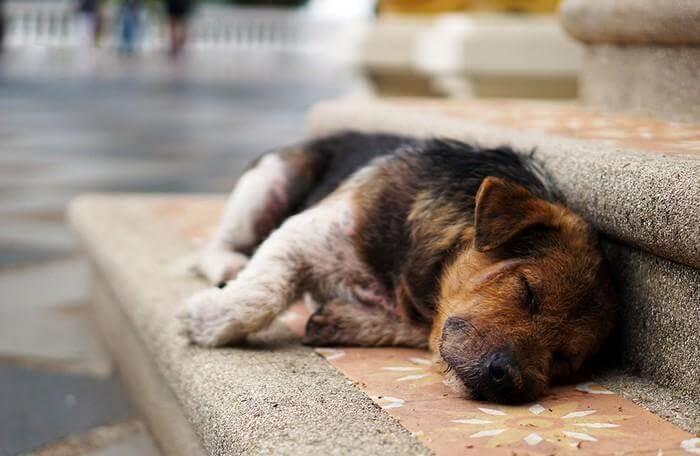бродячая собака на улице
