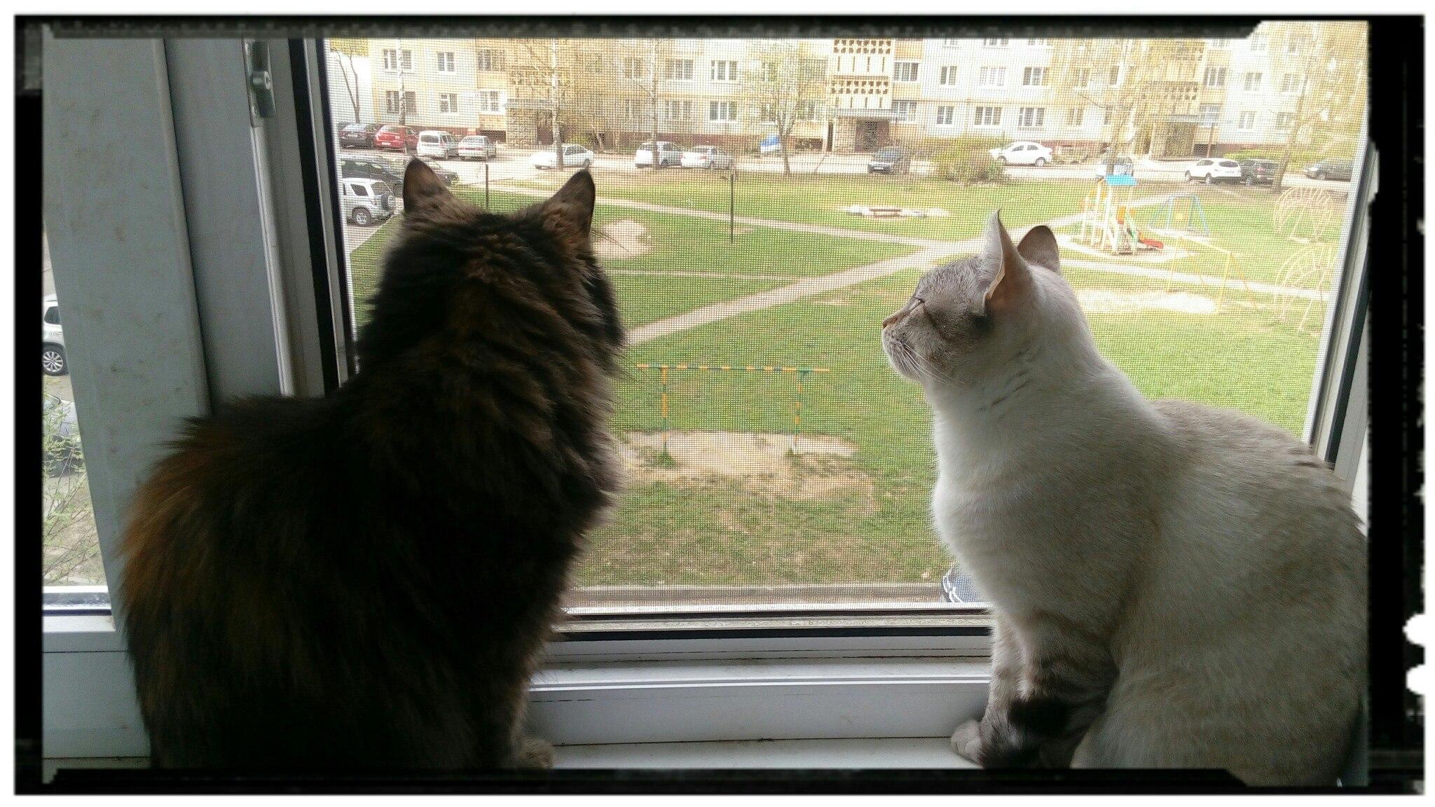 два у кота у окна