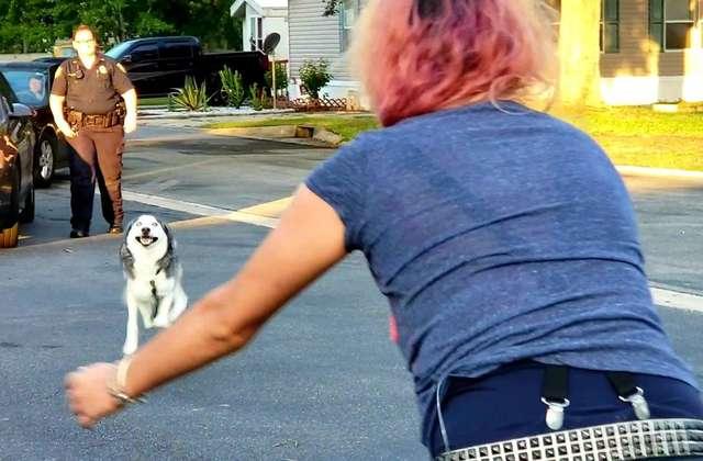 встреча хозяйки и собаки