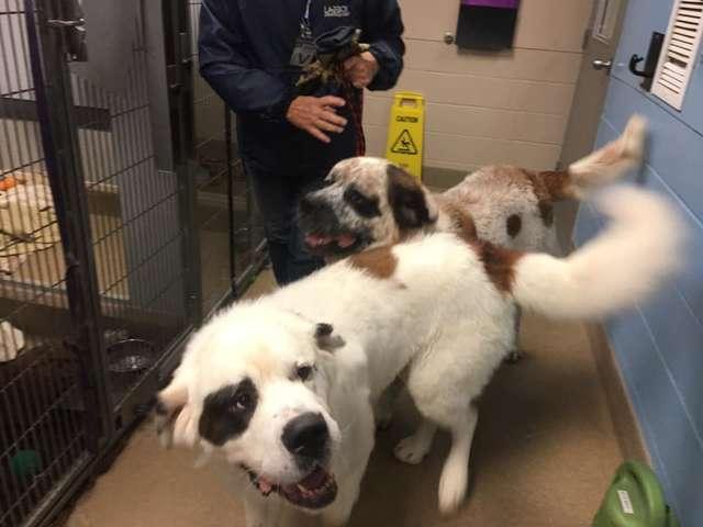 две собаки в вольере