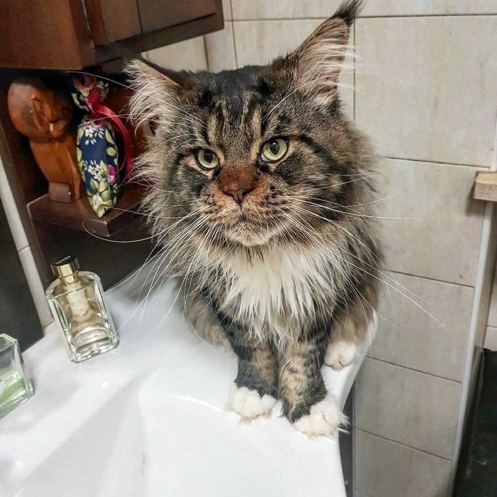 мейн-кун в ванной