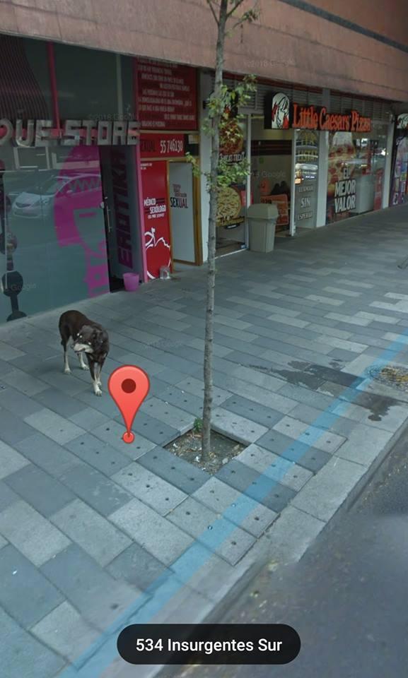 собака возле магазина