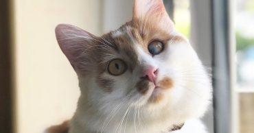 Дом - это всё, о чем мечтал слепой на один глаз котёнок! Но ждать счастья ему пришлось долго...