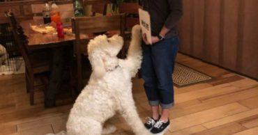 """""""Мы не верили, что она научит нашего пса читать!"""" Но кинолог очень удивила хозяев питомца..."""
