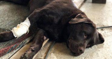 Врачи хотели усыпить собаку-поводыря, но слепой хозяин наотрез отказался! Он продолжает бороться за жизнь любимца!