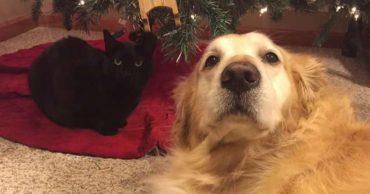 """""""Как мне тебя не хватает!"""" После смерти пса кот сильно загрустил, но однажды он нашел старый ошейник друга..."""
