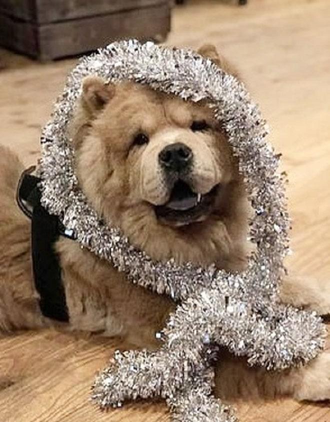 Собака веселая