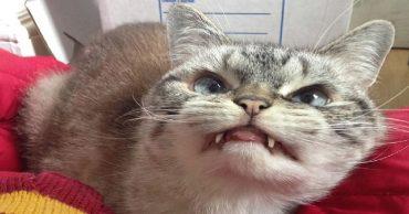 «Кошечка - вампир»: малышка Локи с необычной мордочкой!