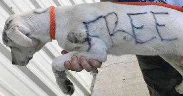 «Разрисованный щенок»: на шерсти живой собаки женщина сделала записи, решив таким образом от нее избавиться…