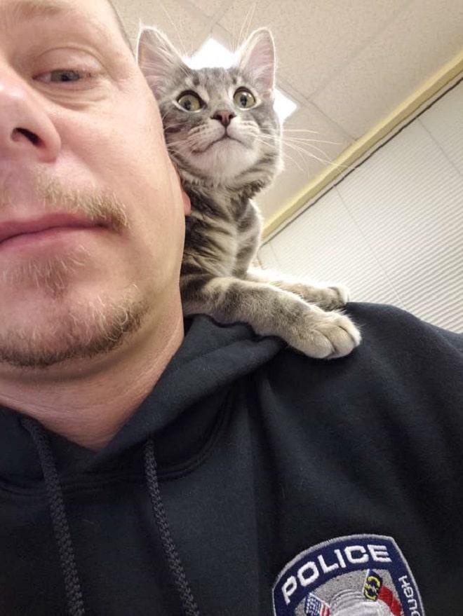 Котенок на плече
