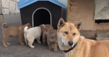 Mum and puppies
