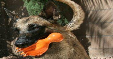 «Вместе мы справимся!»: брошенная собака пряталась от людей, но они объединились, чтобы спасти ее