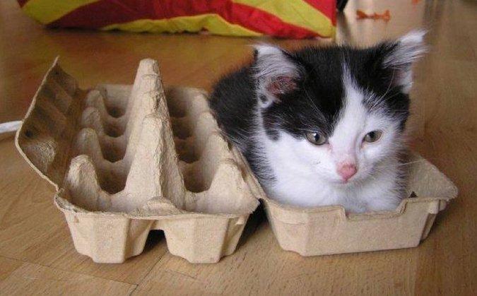 кот в лотке из-под яиц