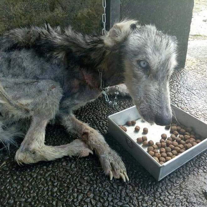 Собака кушает