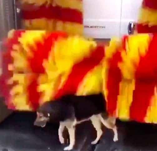 собака на автомойке