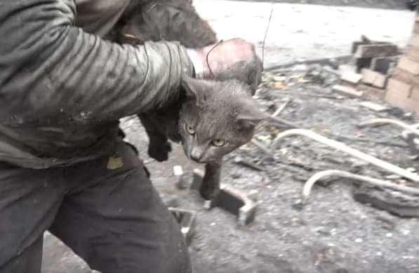 мужчина спас кошку