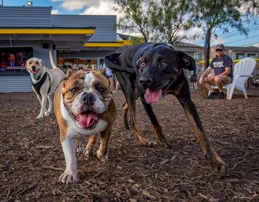 две собаки в парке