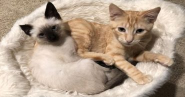 Невзирая на боль, котенок со сломанной челюстью стал поддержкой для испуганной кошки!