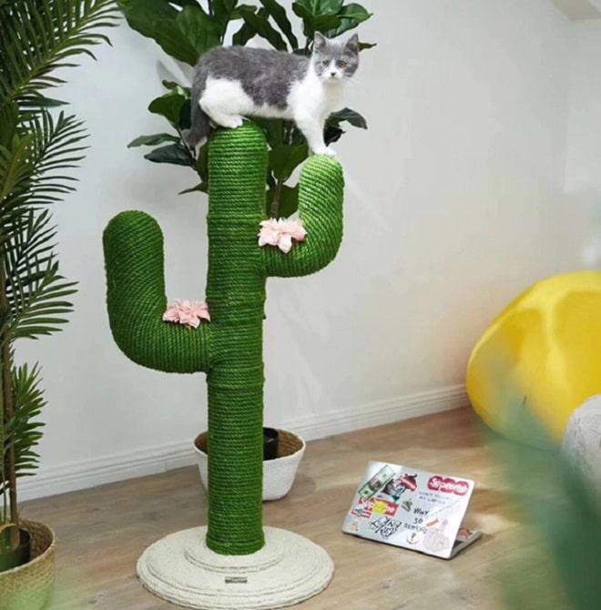Кот на кактусе