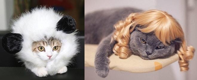 Коты в париках