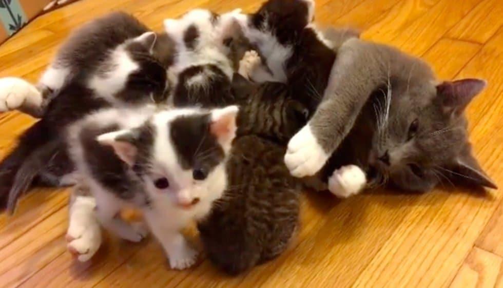 кошка с котятами рис 2