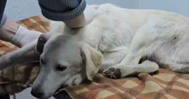 Собаку выволокли из машины, а она стала плакать... Двум девушкам пришлось спасать животное!