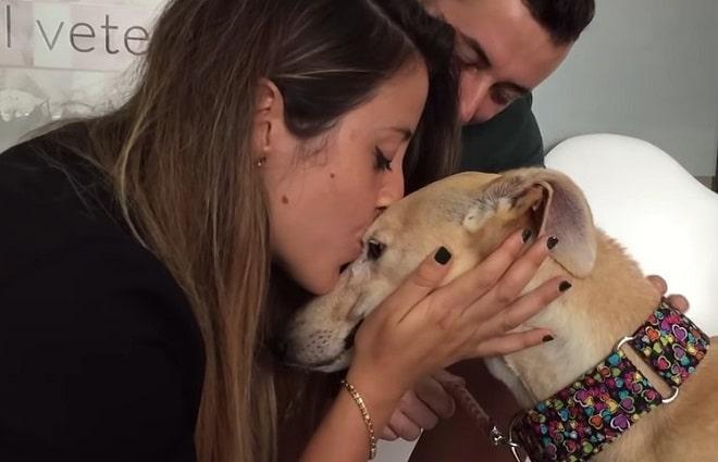 Собаку целуют