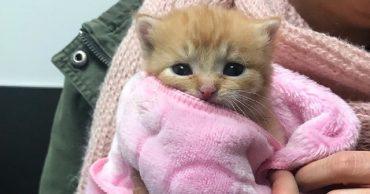 Kitten in pink