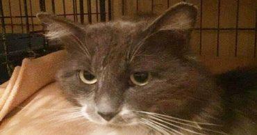 Кот на ступеньке: брошенный питомец сидел на холоде с запиской, в которой кто-то просил не трогать его…