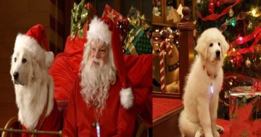 10 замечательных фильмов о животных, которые станут актуальными в Новый год и Рождество!