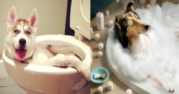 С легким паром: 10 забавных фотографий питомцев, которых застали в ванной!