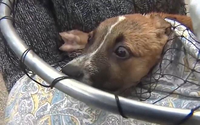 Испуганный щенок