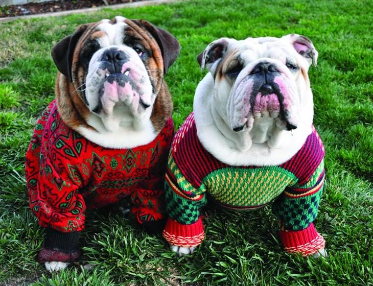собаки в свитерах