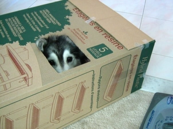 собака в картонной коробке