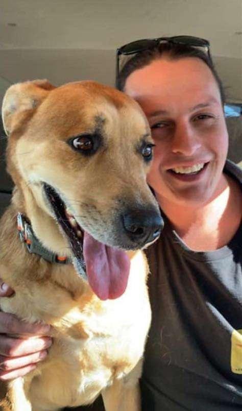 девушка и собака в машине