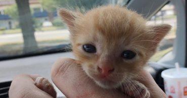 На котенка наехал автомобиль, но он уцелел. Увидев это, девушка остановила машину и схватила малыша