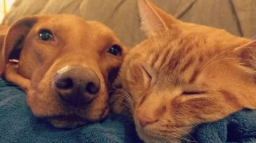 Секретик кота и собаки: хозяйка сняла на камеру, что делают ее питомцы, пока никого нет