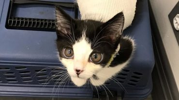 Огромные глаза с испугом выглядывали из коробки. В ней сидел особенный котенок, которого бросили