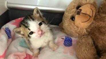 """""""Как же тебе помочь, малыш?"""" Девушка придумала, как спасти жизнь тощему трехнедельному котенку"""