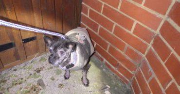 Маленькая лысая собачка забилась в угол чужого двора... Ее бросили прямо в новогоднюю ночь